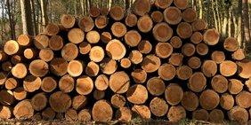 Wald Holz Baumstamm Stämme Forst Bäume Waldarbeiten
