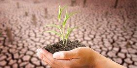 Hand hält Pflanze vor vertrockneter Ackerfläche